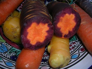 Colorful carrot roots