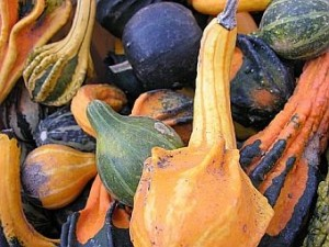 Different colored and shaped gourds