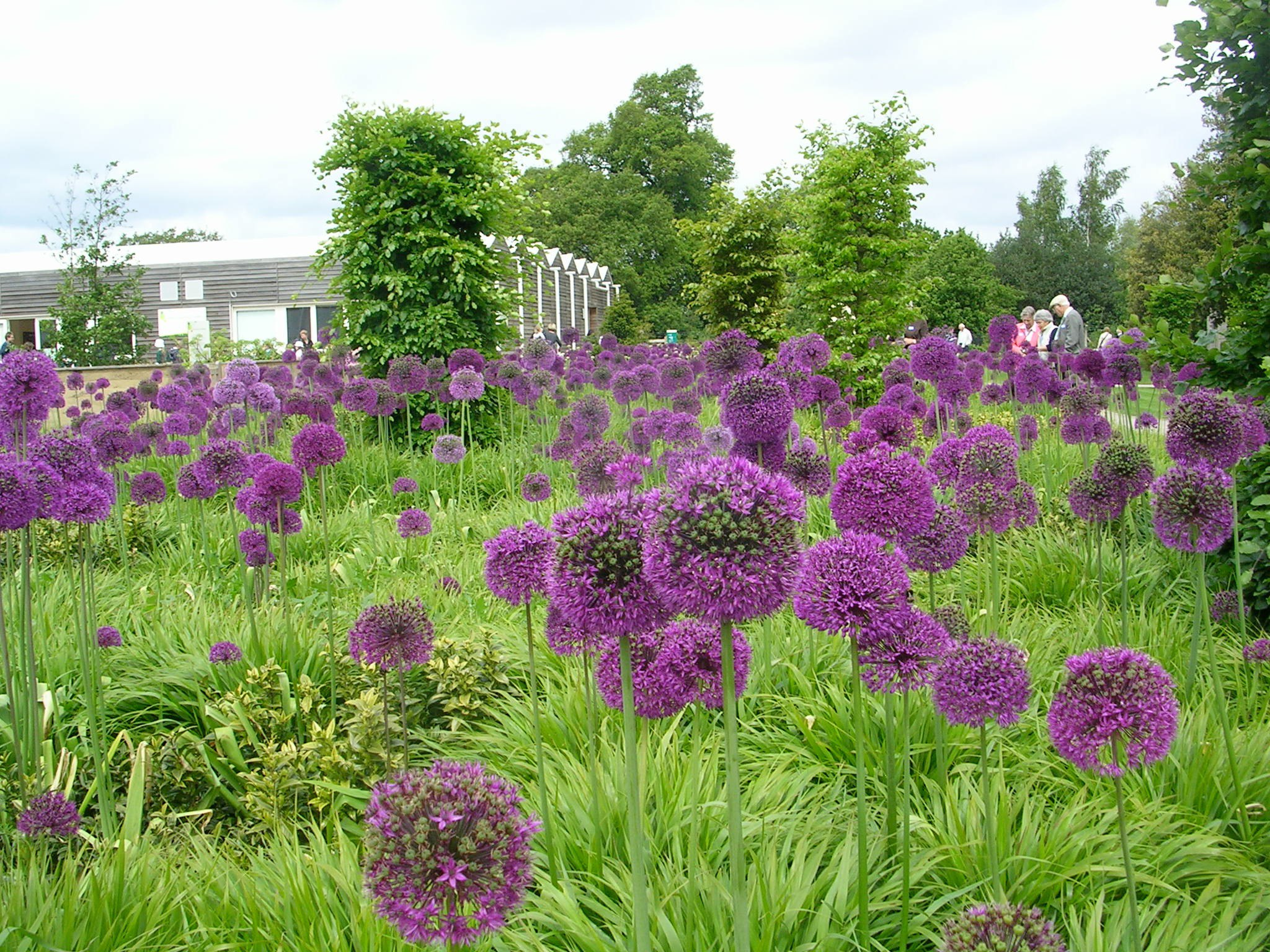Allium Spp And Cultivars