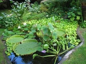 Water Garden- La Stanza