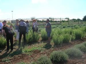 Gli Aromi Herb Nursery