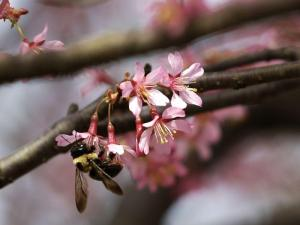 Force flowering branches vermontgardenjournal-floweringbranches-20140221