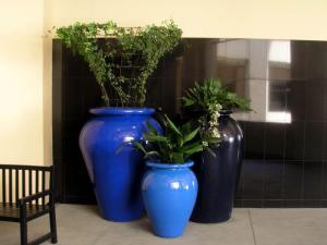 houseplants2