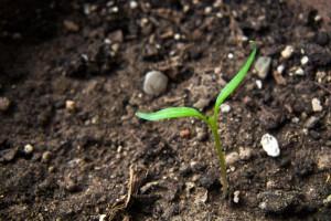 ferrtlizer soil