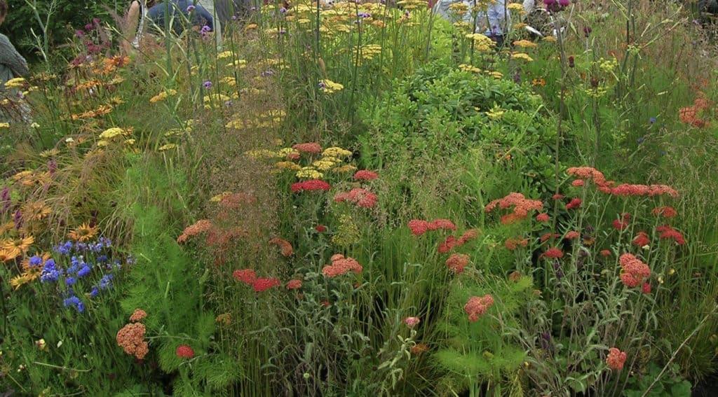 grow a pollinator garden webinar   gardening with charlie